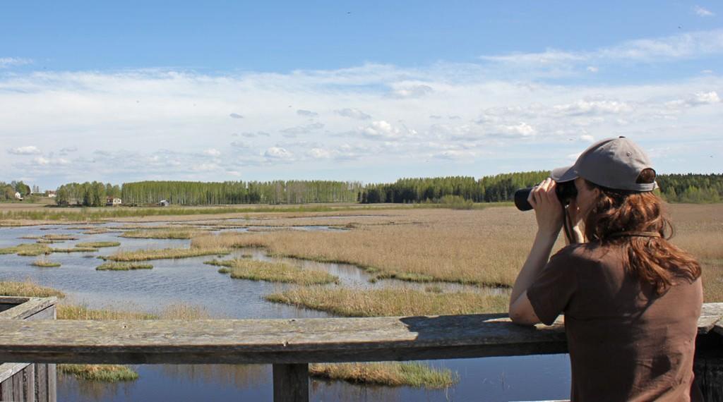 Siikalahti wetland